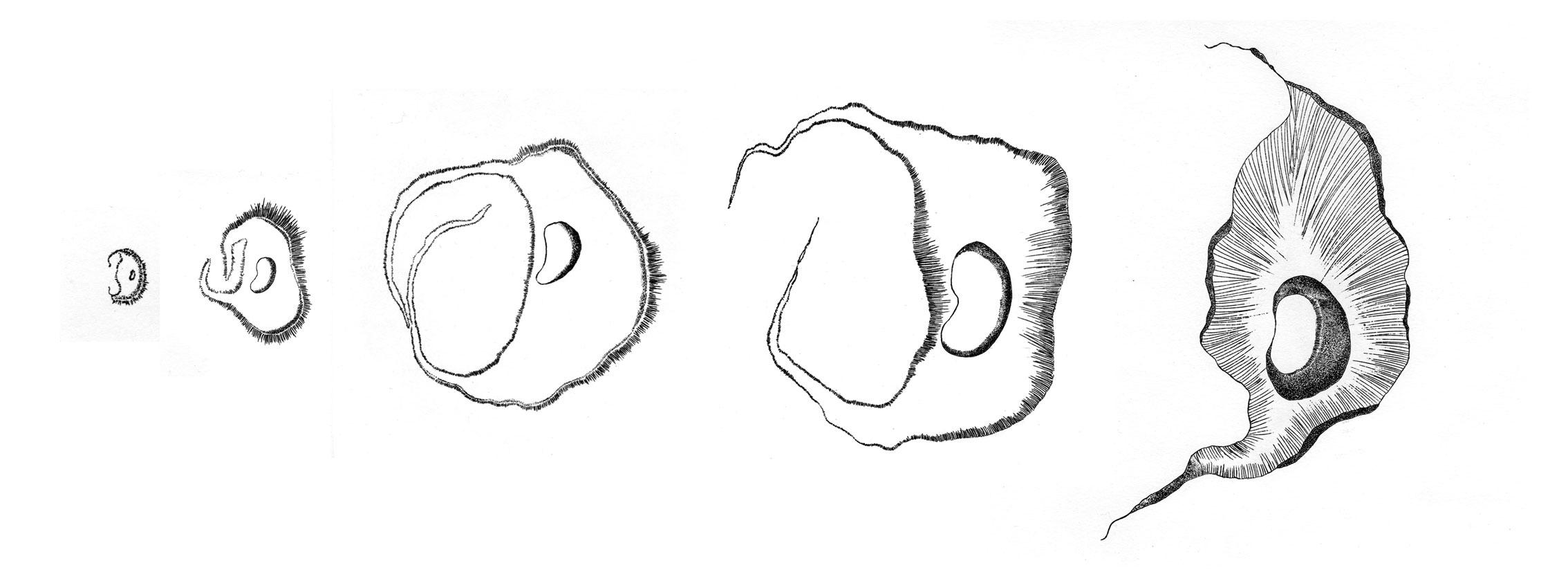 Série Formes Organiques