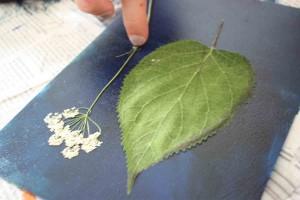 Disposition de végétaux sur la plaque plastique recouverte d'encre.