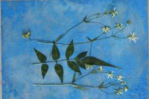 La composition de végétaux réalisée sur une plaque plastique.