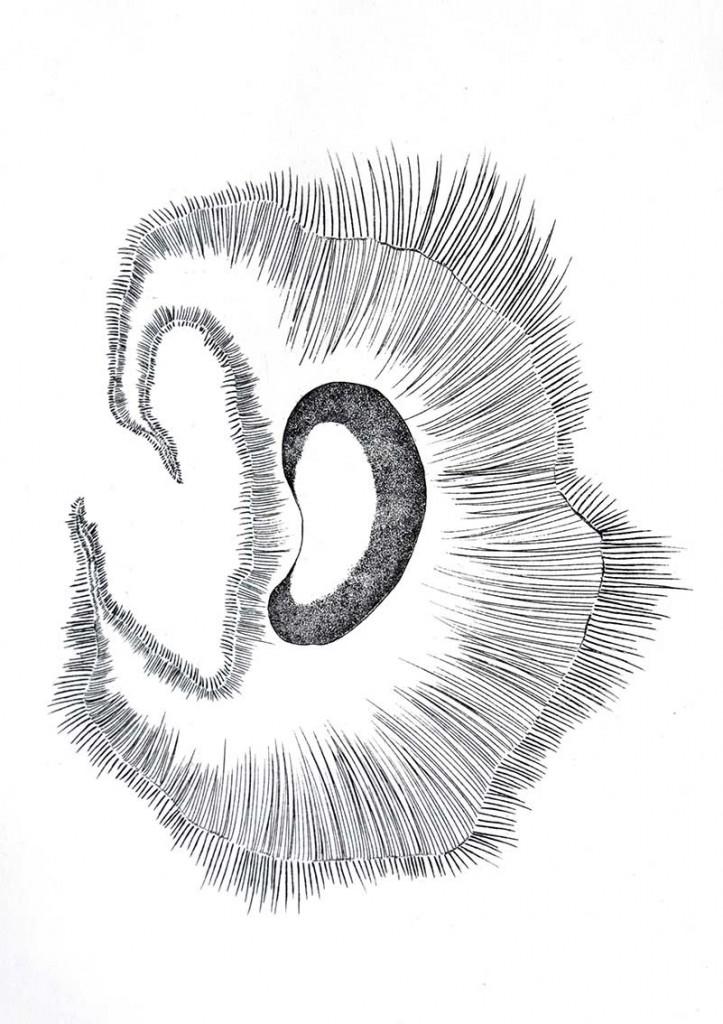 Forme Organique 1