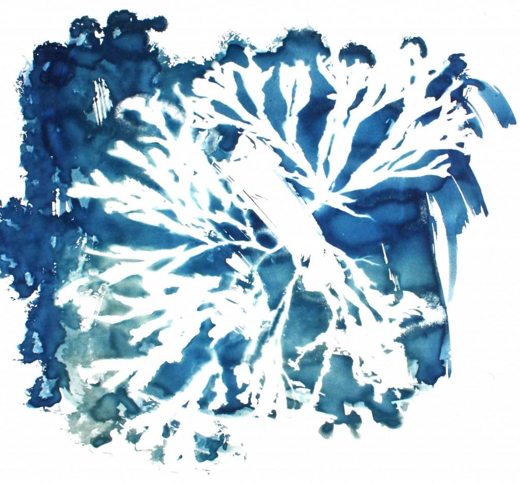 aat-portefolio-algues02